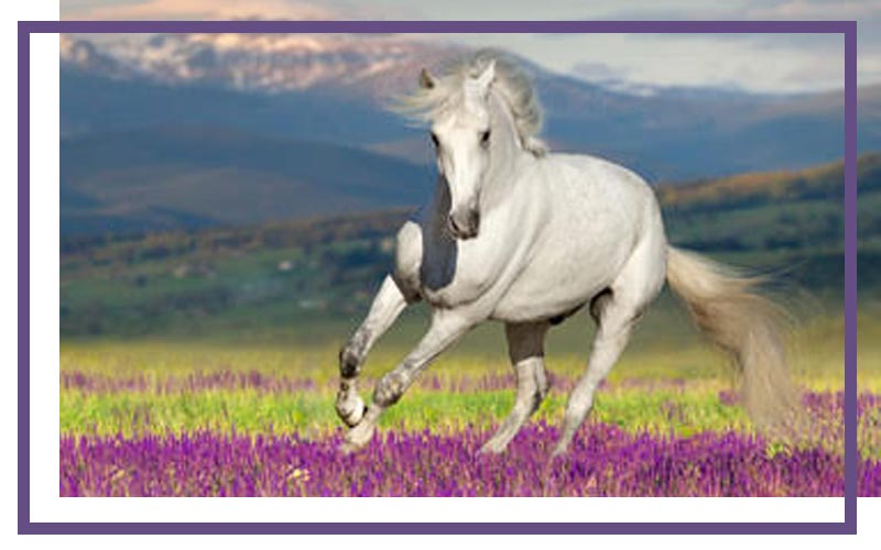 Ingreto's range of equine products